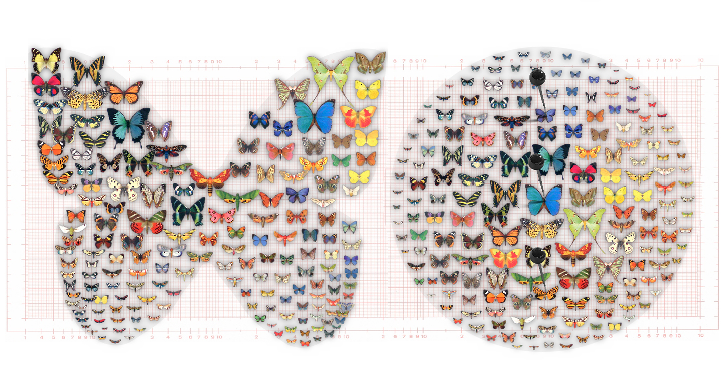 Mit einem neuen Verfahren können Saarbrücker Informatiker Bilder gleichmäßig anordnen. Es reicht eine geringe Anzahl an platzierten Beispielbildern. Die Abbildung zeigt Schmetterlinge, die horizontal nach Farbvariationen und vertikal nach Größe geordnet sind. Foto: Bernhard Reinert / MPI